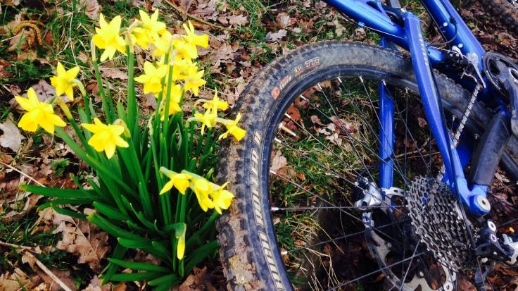 Daffodils and mountain bikes