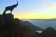 mountaintop_goat_scott